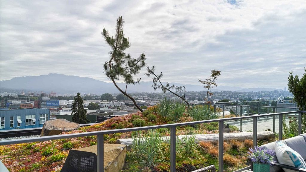 The Eleanore Condominium Green Roof landscape architecture by Gauthier and Associates.  Mount Pleasant, Vancouver BC