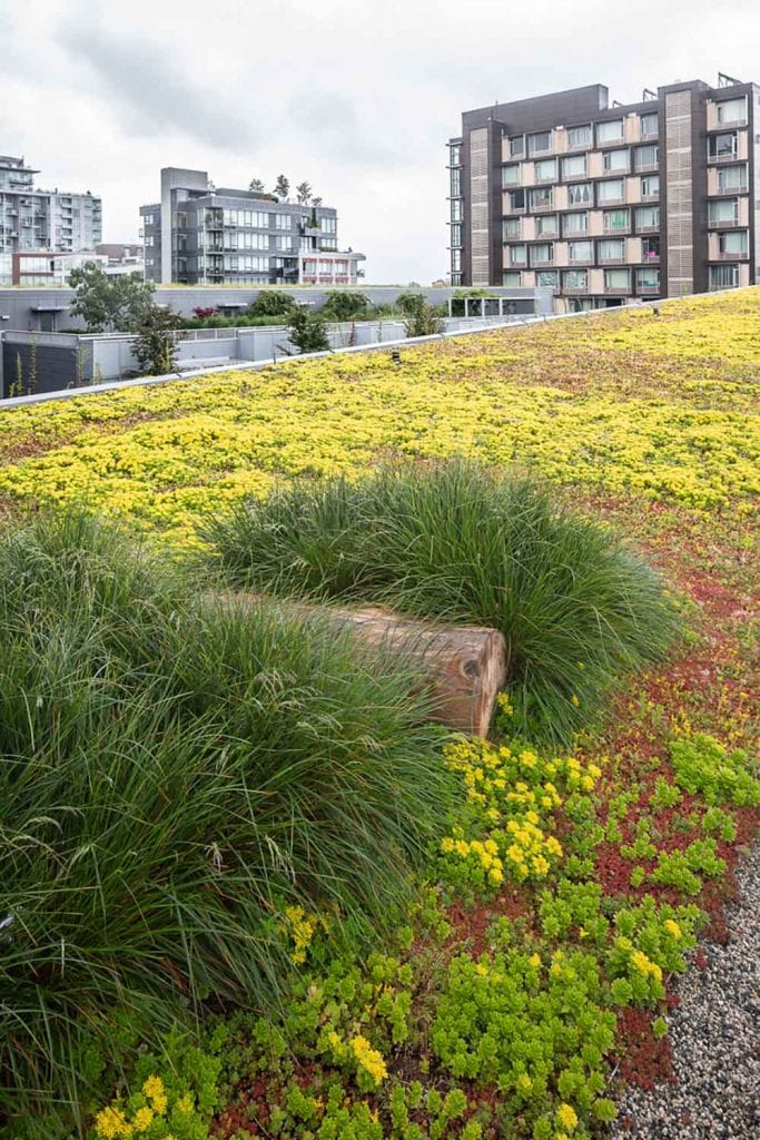 The green roof of Mountain Equipment Co-Op's flagship store in Vancouver.  Landscape design by Gauthier & Associates Landscape Architecture.